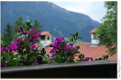 Blumen (Mr.Vamp) Tags: farben blumen flower flowers erwartung frühling mrvamp