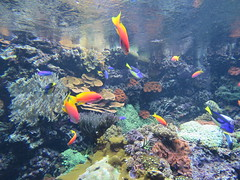 00734921 Aquarium Berlin 1 - 2017 (golli43) Tags: aquariumberlin zoo fische krokodile quallen wasser wasserpflanzen amphibien insekten unterwasserwelt