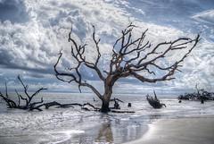 Jekyll (Scott Farrar - dsfdawg) Tags: driftwood beach ocean water saltwater clouds georgia south southern hdr blue skies trees tree st simons island saint sony alpha dsfdawg waves deadwood jekyll