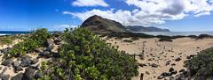 Ka'ena Point (Tom Fenske Photography) Tags: hawaii o'ahu landscape wilderness nature hiking ocean water albatross panorama