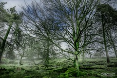 After the Mist (OATH Photography by Alison Richards) Tags: padleygorge derbyshhire peak district landscapephotography artphotography trees vista