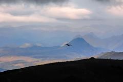 Raven (Corvus corax) flying over the new lava. From Fimmvörðuháls trail, Iceland (thorrisig) Tags: 17082012 brúnir dýr fimmvörðuháls fuglar hattfell himinn hrafn tindifjöll birta fjöll fugláflugi krummi víðerni víðátta iceland ísland island icelandicnature suðurland southoficeland southiceland landscape landslag sigurgeirsson sigurgeirssonþorfinnur dorres thorrisig thorfinnursigurgeirsson þorrisig thorri thorfinnur þorfinnur þorri þorfinnursigurgeirsson birds bird birdsflying flyingbird raven passerinebird passerine corvuscorax