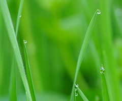 infinitamente... (andrea.zanaboni) Tags: verde green macro nikon gocce drops colore colors rugiada dew