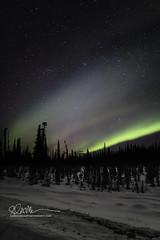 _64A2901 (Ed Boudreau) Tags: alaska alaskalandscape aurora auroraborealis glennallen landscape landscapephotography nightphotography nightscene northernlights snow snowfield stars winter winterscape winterscene usa