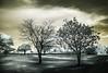The Living. (erglis_m (Mick)) Tags: trees light blackandwhite bw tree contrast canon ir blackwhite interesting nt australia shaddow canoneos20d infrared australianlandscape shaddows infraredfilter theoutback topsprings buntinehighway topspringshotel