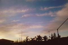 Winter afternoon (vanesastephani) Tags: pink winter light sunset shadow sky tree silhouette clouds sunrise palms landscape photography golden focus colorful warm afternoon wind perspective clear moment