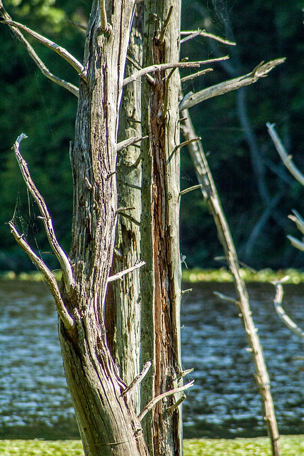 Jackson-Washington State Forest - Knobstone/Backcountry Trails - Spurgeon Hollow Lake - June 25, 2014