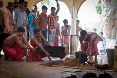Goatee Tripura Sundari temple sacrifice (Sandro_Lacarbona) Tags: man temple goatee blood head cut traditional ceremony entrance goat cutting sword tradition sandro udaipur sacrifice inde tripura sundari matabari tetedechatcom lacarbona