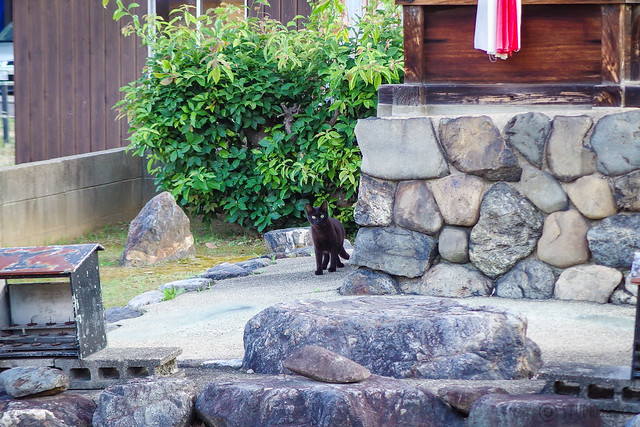 Today's Cat@2014-06-18
