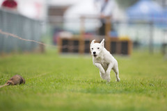 Kent_County_Show_2014_014