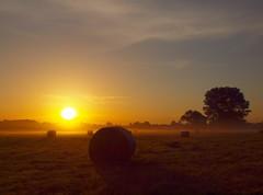 many hay bales P7193969 (2) (hlh 1960) Tags: trees summer sky sun mist sol nature misty sunrise landscape atardecer soleil colours sommer natur harvest meadow wiese himmel summertime landschaft sonne haybale ernte heuballen heurollen