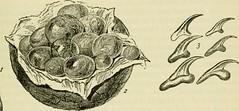 Anglų lietuvių žodynas. Žodis oncosphere reiškia <li>oncosphere</li> lietuviškai.