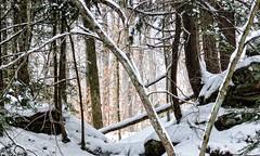 Winter Scene (twhrider) Tags: bigmomma turkeyrunstatepark thechallengefactory nikond7000 herowinner