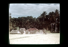 ss19-21 (ndpa / s. lundeen, archivist) Tags: bali color film indonesia nick slide southpacific slideshow 1970s indonesian balinese dewolf oceania pacificislands early1970s nickdewolf photographbynickdewolf slideshow19