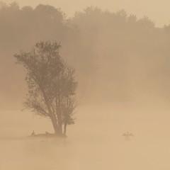 Sérénité **--- ° (Titole) Tags: mist tree sunrise squareformat cormorant cormoran unanimouswinner friendlychallenges thechallengefactory titole nicolefaton