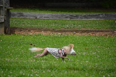 """LuLu In Action Catching the FLAG WHOA Part 6 • <a style=""""font-size:0.8em;"""" href=""""http://www.flickr.com/photos/96196263@N07/14696259078/"""" target=""""_blank"""">View on Flickr</a>"""