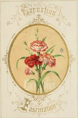 Anglų lietuvių žodynas. Žodis scarlet lychnis reiškia raudonoji lychnis lietuviškai.