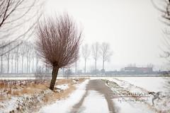 20130119-064 (Panthera-be) Tags: sneeuw belgi weer platteland landschappen assenede vlaamsgewest