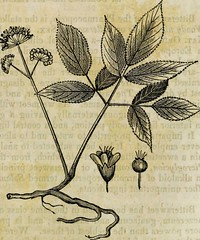 Anglų lietuvių žodynas. Žodis syphiloid reiškia sifiloidas lietuviškai.
