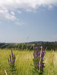Fields (Nicolas) Tags: travel blue sky usa tree nature southdakota america forest holidays unitedstates roadtrip pennington 2014 nicolasthomas