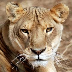 2011-01-25 Sheba (21)