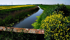 Romney Marsh (richwat2011) Tags: landscape kent nikon view ditch farmland rape fields crops d200 sewer canola rapeseed oilseedrape rapa rapaseed lydd 18200mmvr rappi