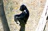 Cesar borra (copito_m) Tags: naturaleza color nature animal nikon animales mywinners abigfave aplusphoto naturalezanaturewatchernatureabigfaveaplusphotoanimalsafricamzafarianimalesplatinumphotoplatinumheartawardzafaripueblazoozoologicoflickrestrellasflickrstascolorcolorsmulticolormusictomyeyesplatinumpeaceaward