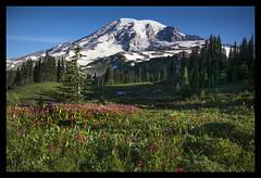 Wildflowers, Mount Rainier (BHagen) Tags: