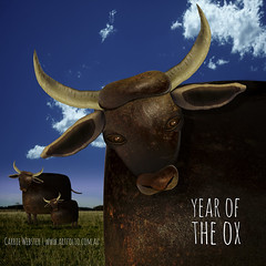 Year of the Ox (carrieduay) Tags: vegetables grass horns bluesky ox beetroot grazing turnips chinesezodiac yearoftheox chineseastrology