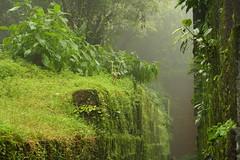 Mahabaleshwar, at Satara (ilovethirdplanet) Tags: india green fog maharashtra satara ind