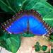 Butterfly at Le Jardin aux Papillons, Vannes