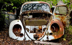 Beetle Wings (David Abresparr) Tags: car vw volkswagen rust beetle rusty scrapyard wreck rost scrap rostig skrot bilskrot bstns