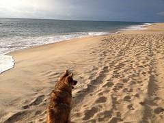 Cassidy Profile Beach