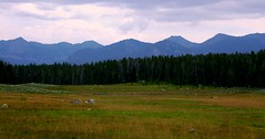 The Beaverhead Mountains (The VIKINGS are Coming!) Tags: vacation mountains forest montana bare bears meadow moose alpine backpack rockymountains elk wilderness trout beaverhead highcountry headwaters