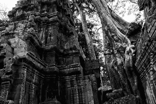 Ta Prohm temple and tree.