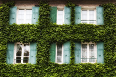 Paris Ivy Covered Windows (GCF Photography) Tags: city windows paris france green french vines europe european cityscape ivy montmartre v covered shutters hr ivycovered fineartphotography georgiafowler gcfphotographycom
