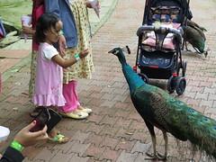 "Bird Park <a style=""margin-left:10px; font-size:0.8em;"" href=""http://www.flickr.com/photos/83080376@N03/15364854852/"" target=""_blank"">@flickr</a>"