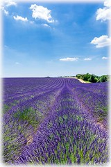 AL-Lavande-Valensole-20150626-042.jpg (Shoot Enraw) Tags: champs provence 26juin lavandes valensole 18200mmf3556 1116mmf28