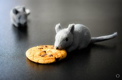 If you give him a cookie.... (Little Hand Images) Tags: mice greymouse cookie chocolatechipcookie food snack shallowdof blackbackground