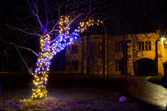 Winter Lights 2016 057 (dblaikiephotography) Tags: nighttime colour nationaltrust angleseyabbey winterlights