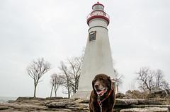 Marblehead Lighthouse (in explore 3/26/17) (doug dibble) Tags: marbleheadlighthouse lighthouse greatlakes lakeerie ohio chocolatelab labradorretriever lab marblehead seniordog