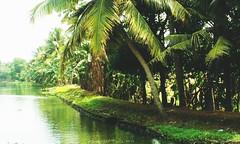 Backwaters (Shrayansh Faria Photography) Tags: shadows shades trees lush green waters backwaters