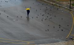 Wet (Κωνσταντινος Μαντιδης) Tags: yellow city man umbrella street rain