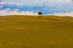 Landscape (paolo di sarra) Tags: albero collina terra