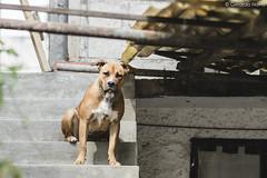 Camila. (Gerardo Nava Fotografía.) Tags: sony alpha a77ii sonyflickraward sonyalpha sonyméxico sonya77ii sonyalphamexico sonyzeiss sal135f18z sonnart18135za sonnart18135 portrait retrato dog perro