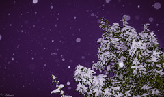 Snow bokeh (Nik Salvador) Tags: snow bokeh winter