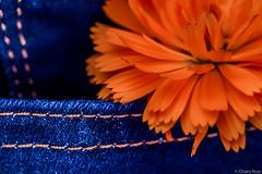 """Macro Mondays"" ""Orange and Blue"" (Charo R.) Tags: macro mondays orange blue naranja azul canon"