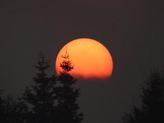 Sun (Tobymeg) Tags: sunrise sky mist scotland holywood panasonic dmcfz72 sun