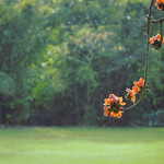 Season of Love. thumbnail