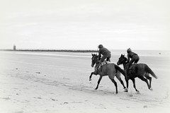 morning gallop (mulligan.janice) Tags: racehorse beach gallop hack sand sea coast horse hoof mornington